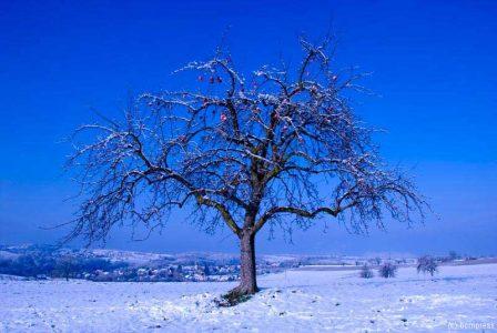 Winteräpfel