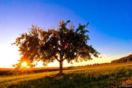 Sommerbaum