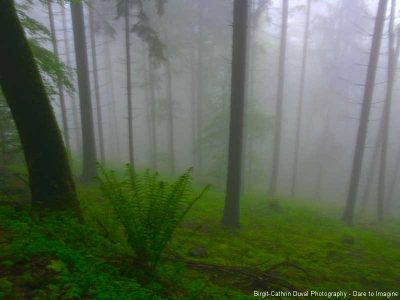 Nebel im Schwarzwald