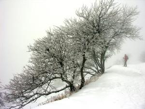belchen-schneewanderung-web.jpg
