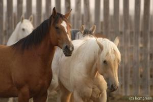 Horses web.jpg