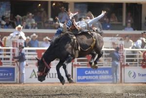 Rodeo Pferd 1 web.jpg