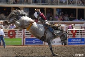 Rodeo Pferd 3web.jpg