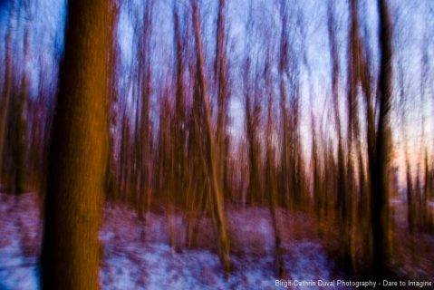 Dancing Forest evening
