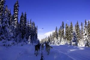 dog-sled-2.jpg