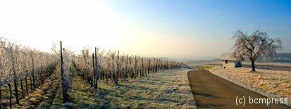 bammerthuesli-wintersweiler-web.jpg