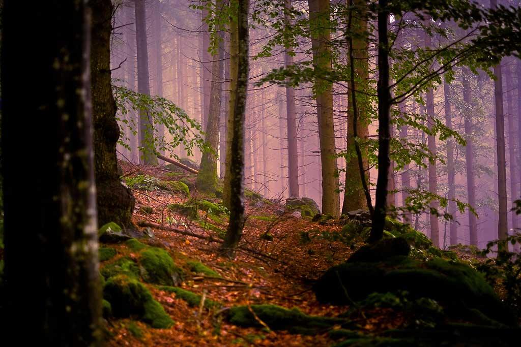Mythisches Licht im Schwarzwald