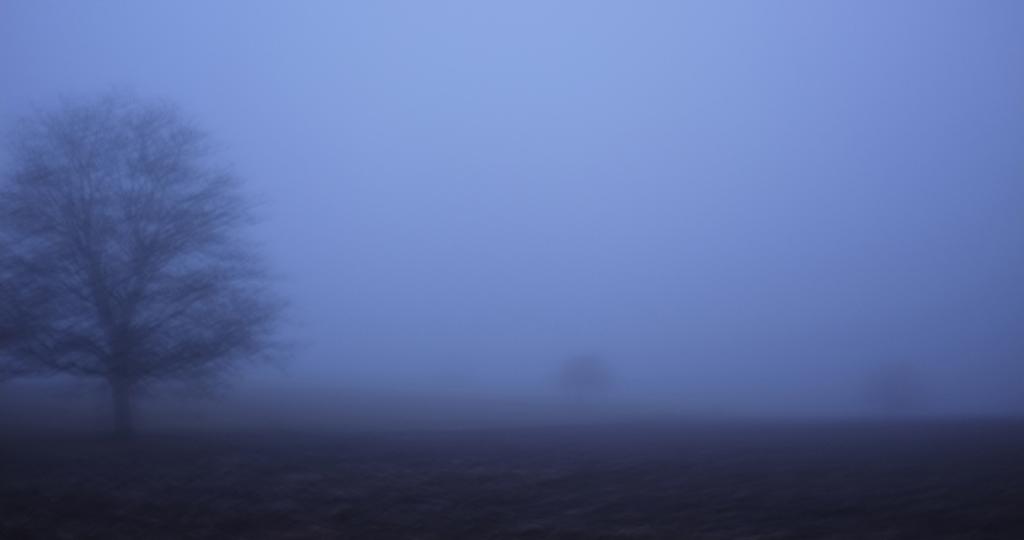 Apple Tree in the fog