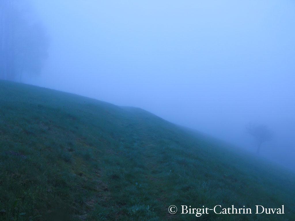 nebel-web