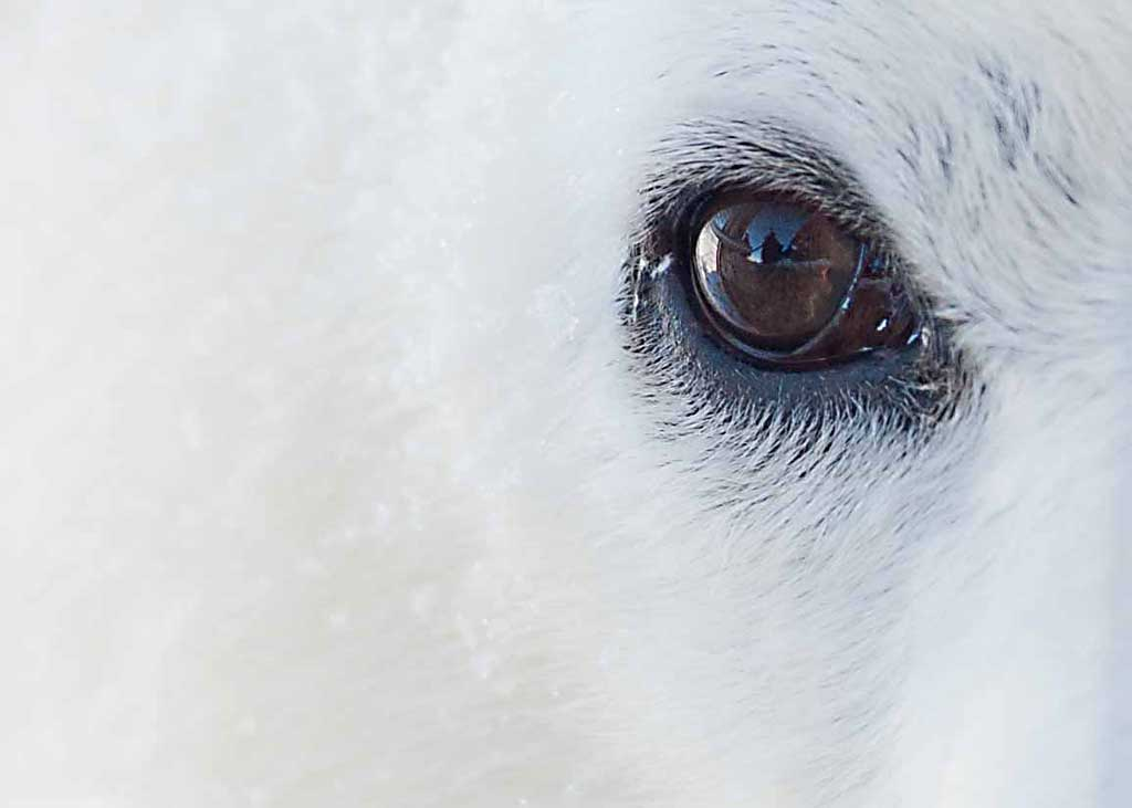 arctic-eye