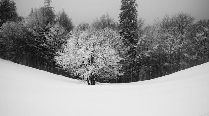 Schwarzwald Winterzauber