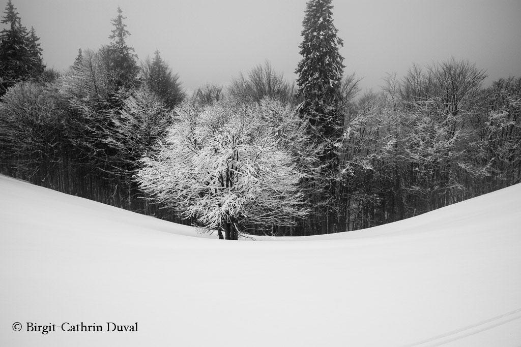 Winterzauber Bernau