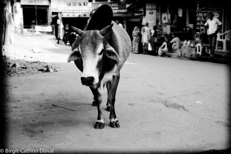Rishikesh-Kuh