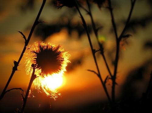Sommerlicht