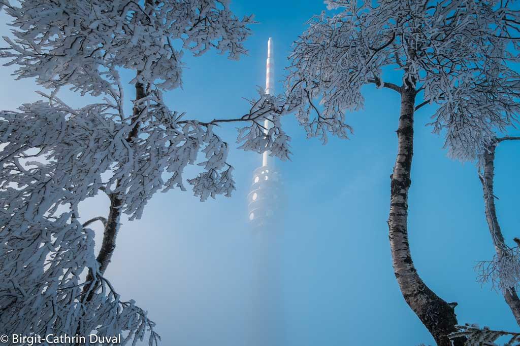 Bizarre Winterschönheit