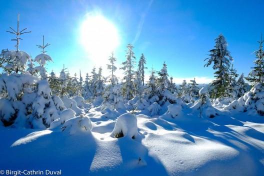 Winterglück auf der Badener Höhe