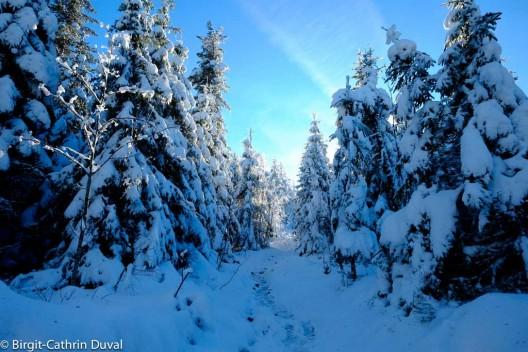 Als hätten wir ein Tor zur Winterwelt betreten