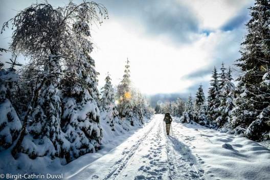 Der Weg, der Wald und du