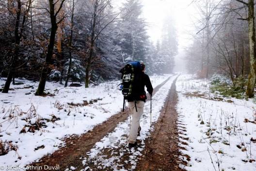 Der Westweg taucht kurz hinter Dobel wieder in die Tannenwälder des Schwarzwalds ein