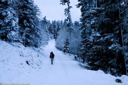 Selbst dem breiten Forstweg liegt bei Schnee ein gewisser Zauber inne