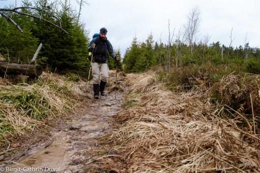 Der Westweg im Januar: Matsch statt Schnee