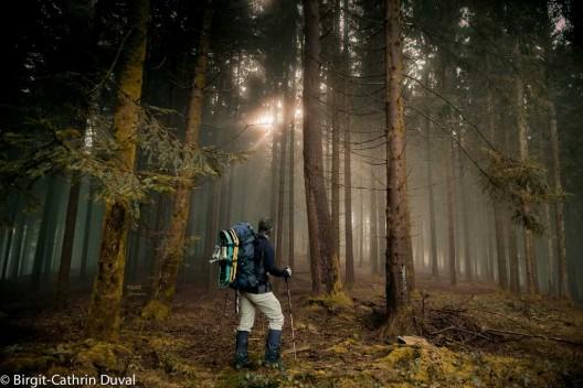 Unterwegs im mystischen Nebelwald
