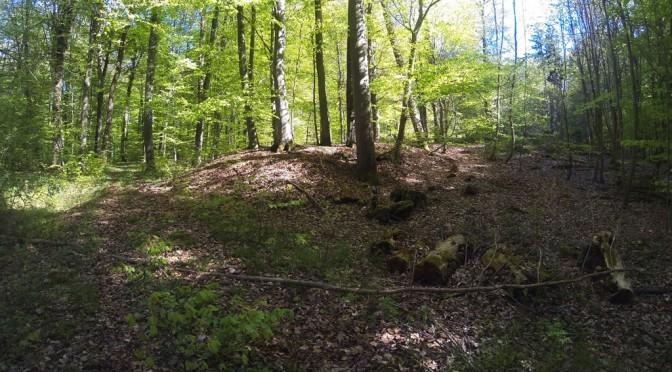 Kraftorte im Markgräflerland: Die keltischen Grabhügel vom Katzenberg
