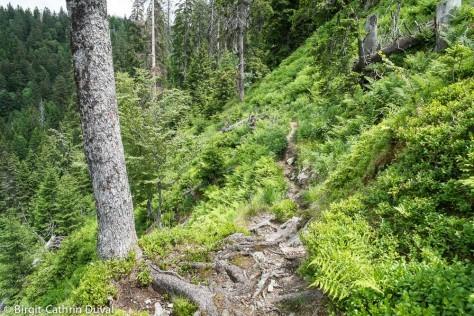 Der Silberberg-Trail, ein alpiner Pfad im südlichen Schwarzwald