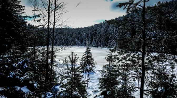 Der Herrenwieser See im Schwarzwald