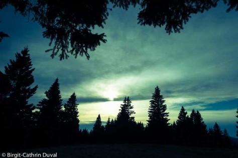 Bei diesen Stimmungen weiß man, warum die Menschen den Wald als dunkel und finster empfanden