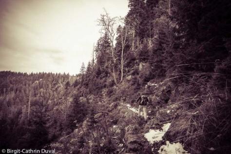Ein alpiner Pfad mitten im Schwarzwald