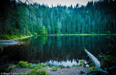 Der Wilde See, Kronjuwel des Nationalpark Schwarzwald