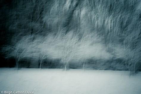 Bäume im Winter sind von einer zauberhaften Anmut umgeben