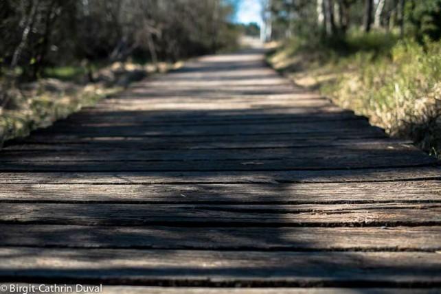Der Bohlenpfad führt weit in das Ried hinein