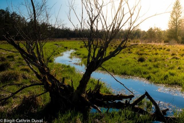 Das Wurzacher Ried zählt zu den größten intakten Hochmooren in Mitteleuropa