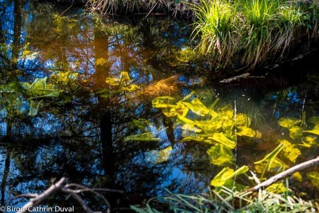 Farben und Formen - im Moor gibt es vieles zu Entdecken