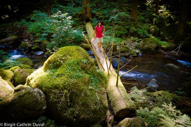 Unterwegs im Urwald der Teichschlucht