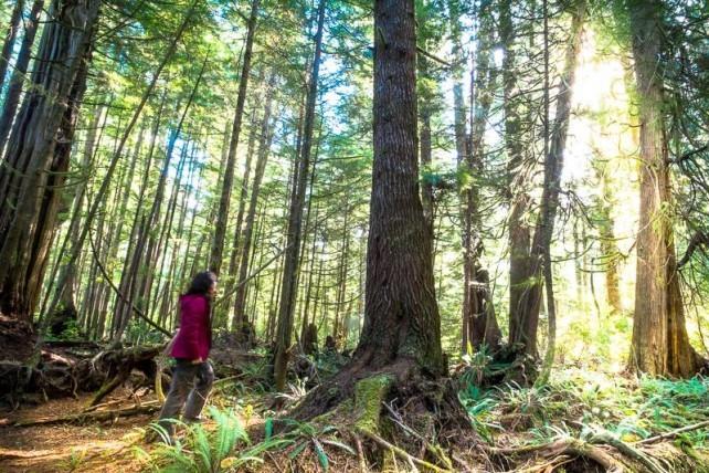 Die beste Luft der Welt im Regenwald von Vancouver Island