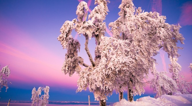 Winterstille – Fotografieren mit der Fuji X-Pro 1