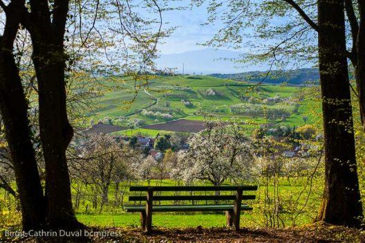 Platz nehmen und genießen - mit dieser fantastischen Aussicht oberhalb von Obereggenen bis zu den Vogesen