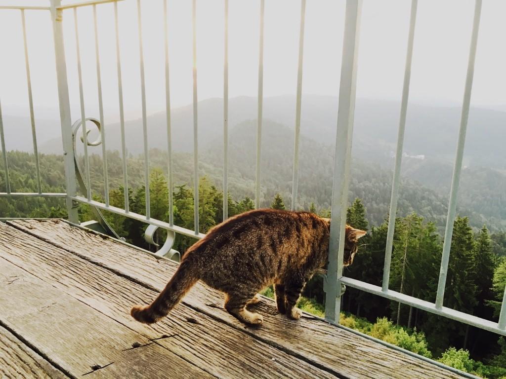 Furchtlos blickt der Schwarzwald-Tiger in die Tiefe Iphone Foto: Birgit-Cathrin Duval