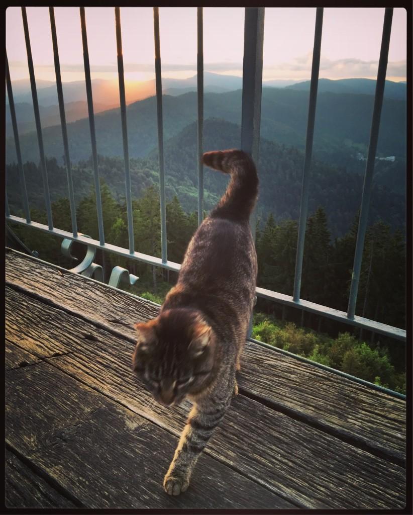 Sonnenaufgang mit Katze auf dem Hochblauen