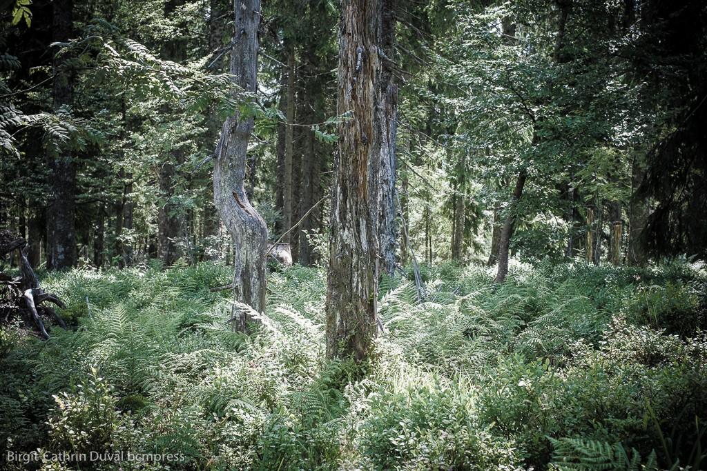 Gesunde Wälder übermitteln Wohlfühlbotschaften, sagt der Autor Peter Wohlleben