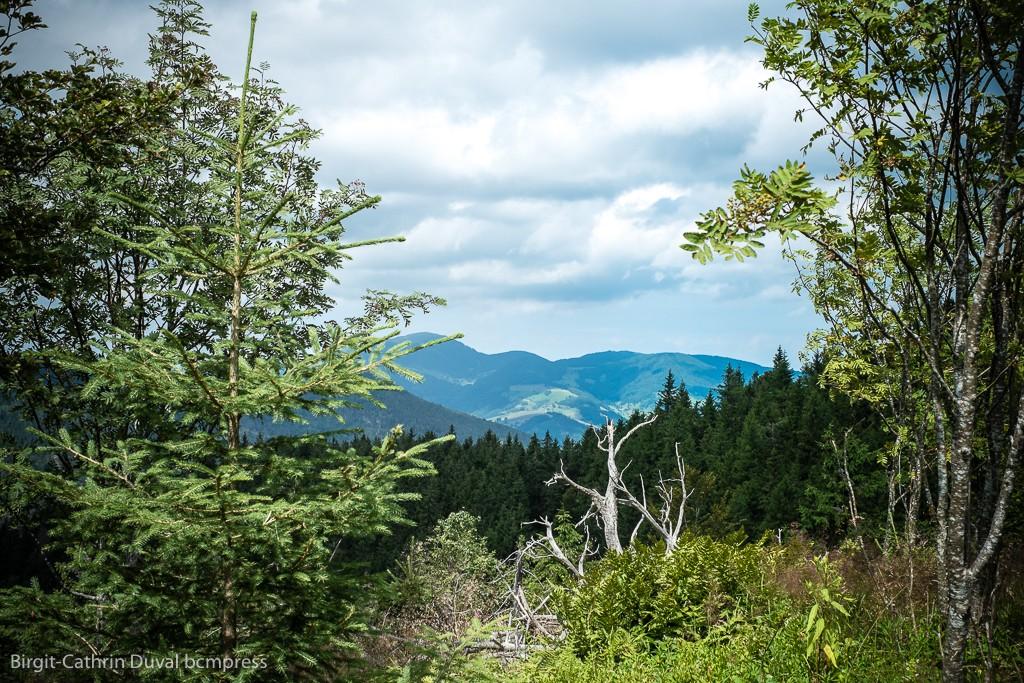 Offene Waldflächen erlauben herrliche Fernblicke
