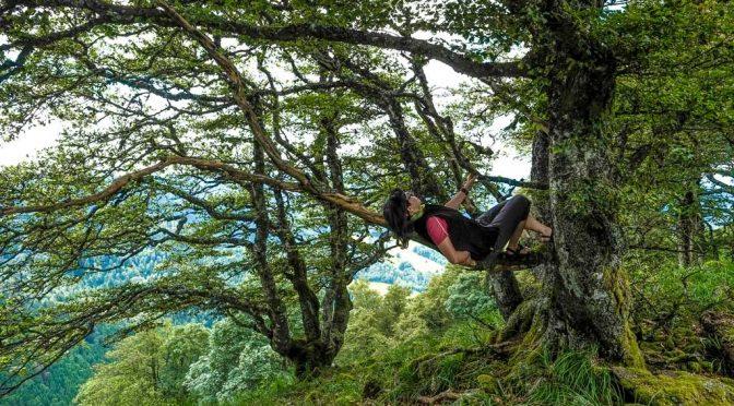 Schwarzwald Wandertipp: Unterwegs im Fingerhut-Dschungel