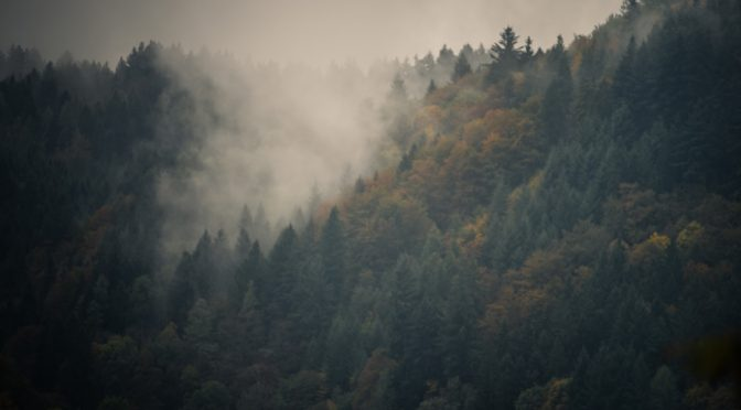 Nebelfotos vom herbstlichen Schwarzwald