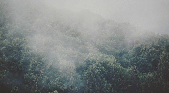 Sommermelancholie im Schwarzwald