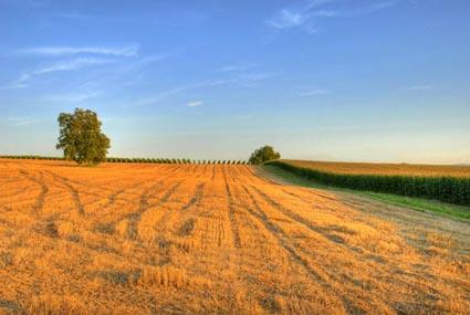 Abendstimmung über den Feldern